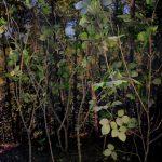 Diorama habitat forestier