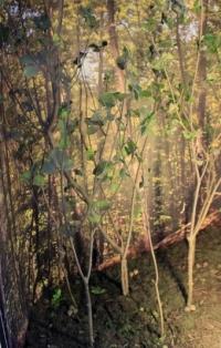 Diorama d'habitat forestier